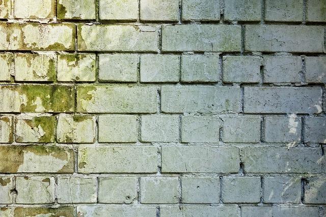 עובש בקירות – אל תזניחו את זה
