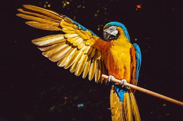 ציפורי מחמד ותוכים מה הם צריכים לאכול